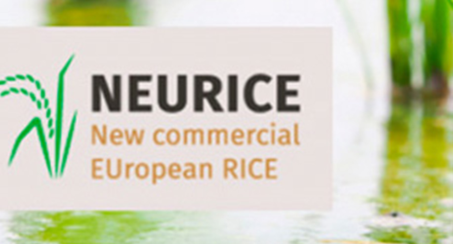 The Rice Growers Chamber of Montsià participates in the Neurice Project