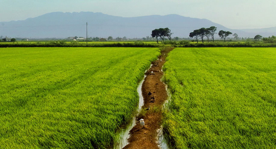The Rice Growers Chamber of Montsià receives two new subsidies.